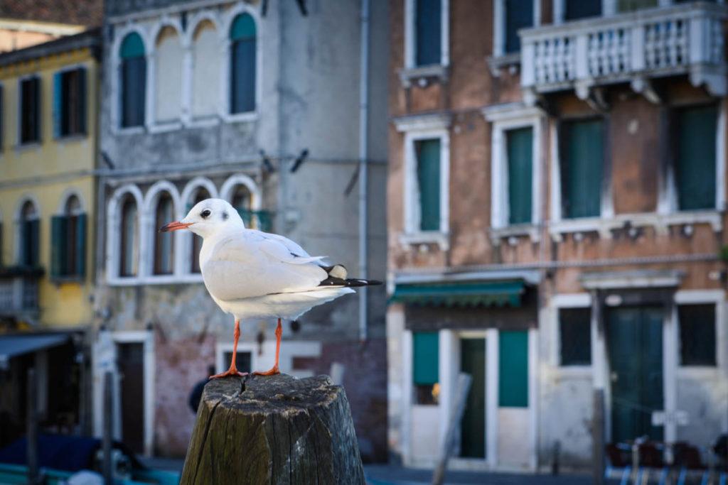 DZidra Fotografie, reisfotografie Venetie